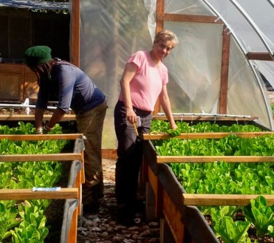 More About Building an Aquaponics System.