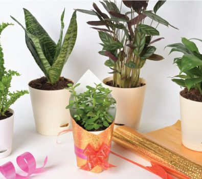 site for selling planters